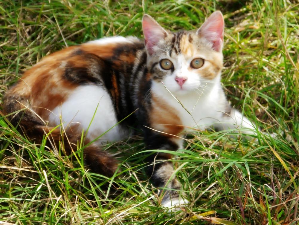 Amber grass 1
